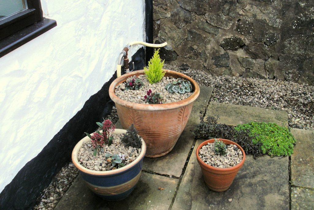 Plant pots replanted on patio