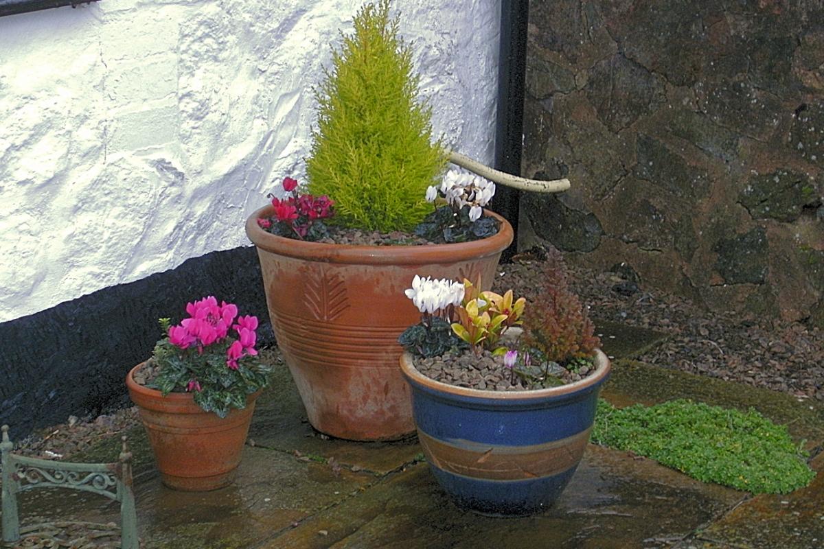flower pots on patio