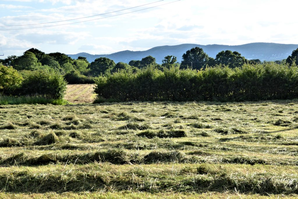 cut hay in field below barn